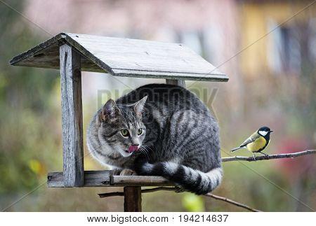 cat hunting a bird on a bird feeder