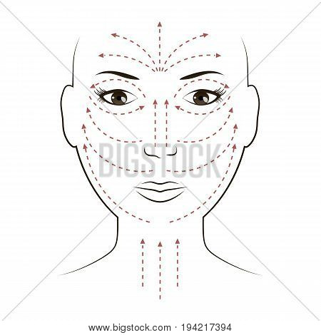 Facial massage lines for applying cream on face and neck. Vector illustration