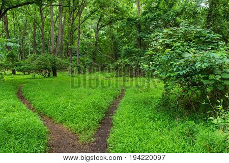 Two trails pass through this vibrant green woodlands in Central New Jersey.