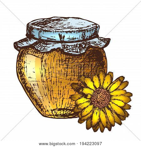 Hand drawn ink sketch illustration of honey pot organic nature product. Vector