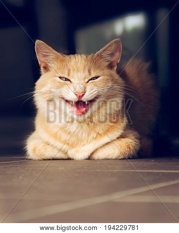 Portrait of funny smiling ginger cat outdoor