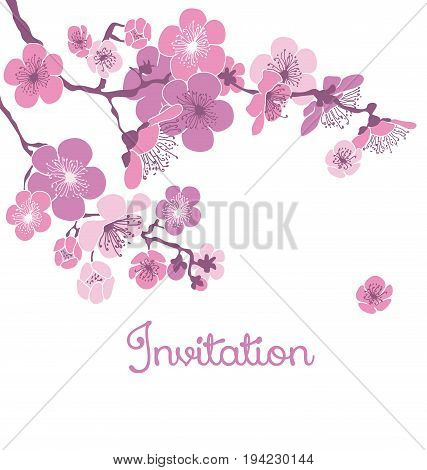 pale color cherry blossom on white background. vector illustration