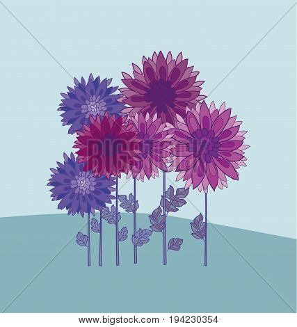 chrysanthemum flower design element.  aster floral decorative vector illustration. fall blossom in violet colors motif. autumn flowers rustic peasant style template