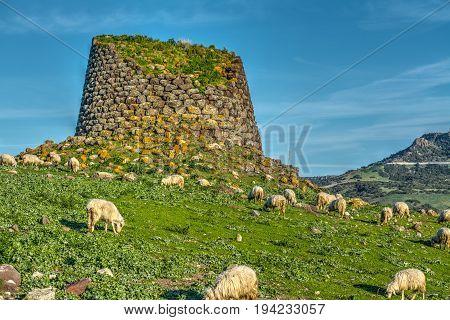 Nuraghe and herd of sheep in springtime. Sardinia Italy