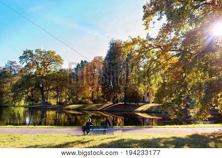 Colorful foliage in the autumn park, sunny afternoon