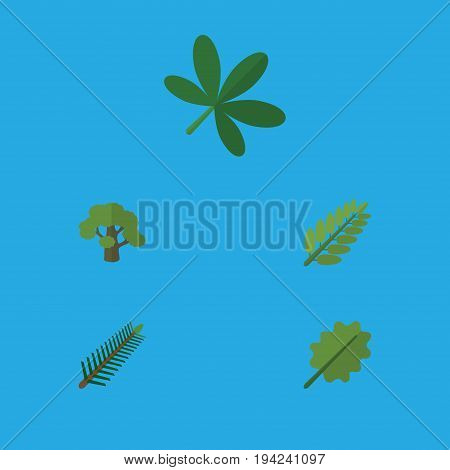 Flat Icon Nature Set Of Maple, Spruce Leaves, Alder And Other Vector Objects. Also Includes Spruce, Alder, Oak Elements.