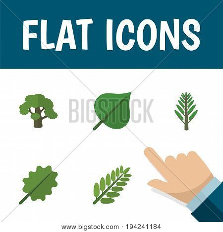 Flat Icon Nature Set Of Tree, Leaves, Alder And Other Vector Objects. Also Includes Tree, Hickory, Forest Elements.