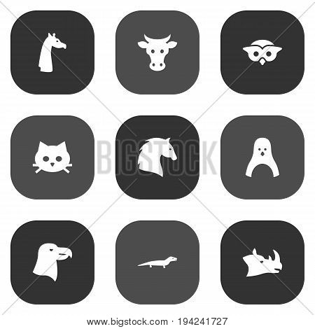 Set Of 9 Alive Icons Set.Collection Of Steed, Pussy, Camelopard And Other Elements.