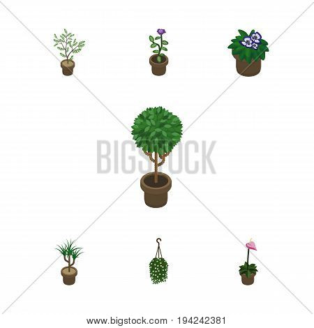 Isometric Plant Set Of Fern, Blossom, Houseplant And Other Vector Objects. Also Includes Blossom, Houseplant, Plant Elements.