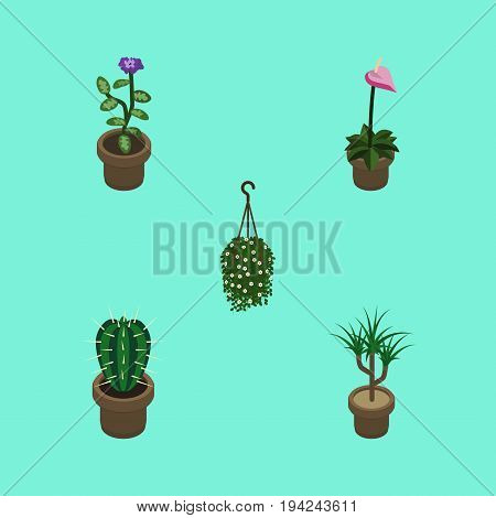 Isometric Flower Set Of Flower, Houseplant, Grower And Other Vector Objects. Also Includes Flowerpot, Hanging, Flower Elements.