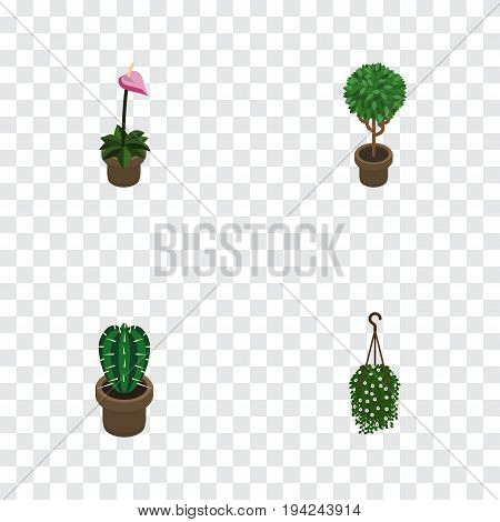 Isometric Houseplant Set Of Blossom, Grower, Peyote And Other Vector Objects. Also Includes Cactus, Hanging, Flower Elements.