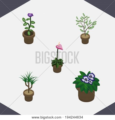 Isometric Flower Set Of Flower, Houseplant, Grower And Other Vector Objects. Also Includes Botany, Flower, Pot Elements.