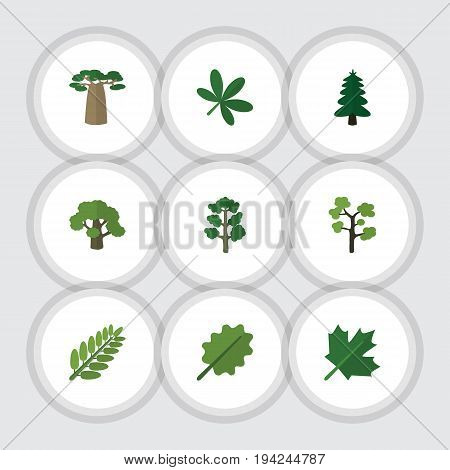 Flat Icon Bio Set Of Baobab, Leaves, Maple And Other Vector Objects. Also Includes Baobab, Oaken, Park Elements.