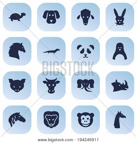 Set Of 16 Zoo Icons Set.Collection Of Gecko, Wildcat, Horse And Other Elements.