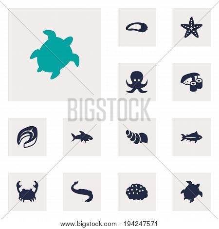 Set Of 12 Food Icons Set.Collection Of Tortoise, Asteroid, Devilfish And Other Elements.