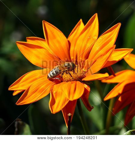 Most bee collects nectar on flower and pollinate the plant.
