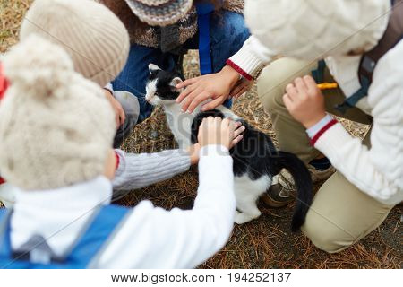 High angle shot of children petting cat outdoors on the way to school