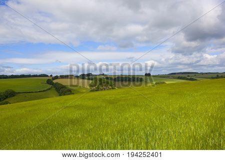 Green Barley Fields