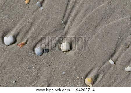 Broken Seashells On Wet Sand Beach At Sun Summer Day