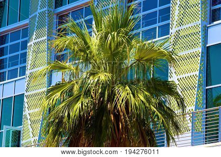 Palm Tree beside a contemporary style highrise office building with large windows