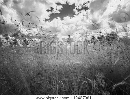 infrared photography - summer meadow with flowers