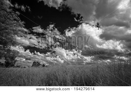 infrared photography - summer meadow and cloudy sky