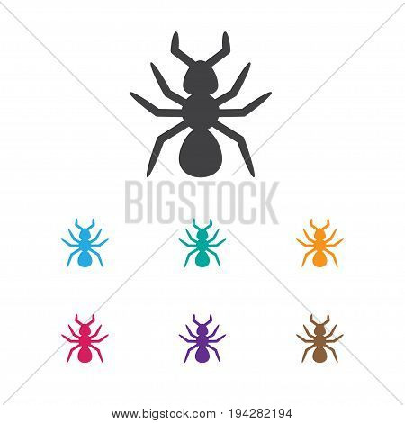 Vector Illustration Of Animal Symbol On Parasite Icon. Premium Quality Isolated Bedbug Element In Trendy Flat Style.