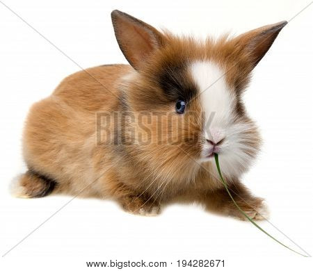 a cute litte rabbit isolated on a white