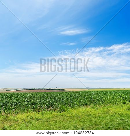 green agricultural field and blue cloudy sky