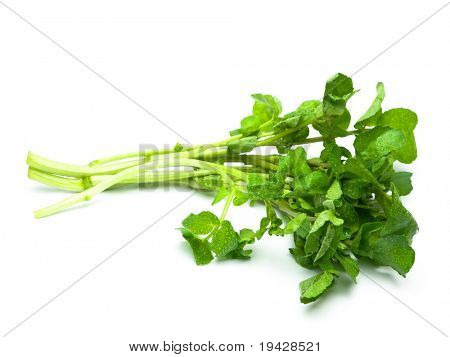 watercress isolated on pure white