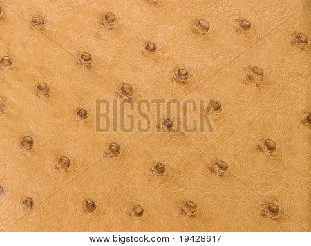 full quill ostrich leather texture