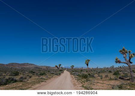 Vast Blue Sky Over Joshua Tree
