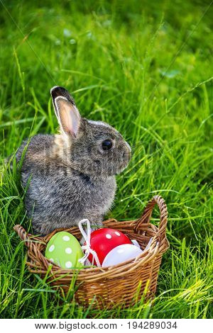 easter rabbit and easter eggs in spring grass
