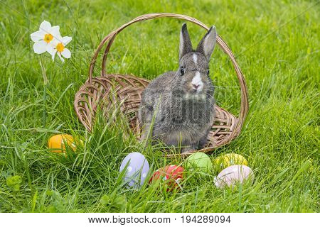 easter rabbit and easter eggs in green grass