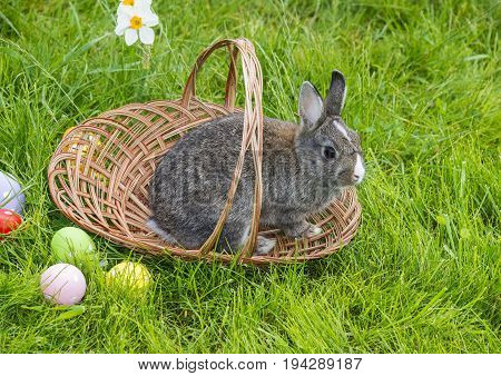 easter rabbit and easter eggs in grass