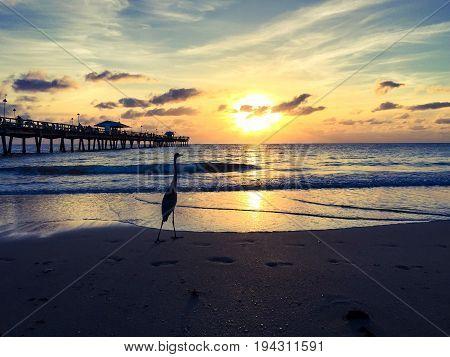 Stork on the sunrise beach in vintage style, Florida