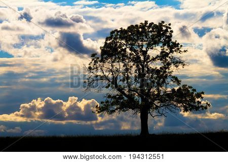 Single tree at sunset with a silhouette against the clouds