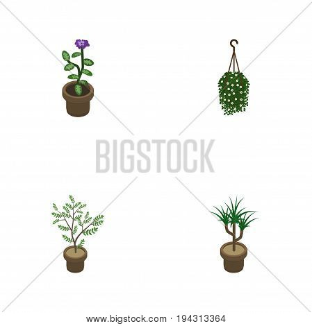 Isometric Plant Set Of Fern, Blossom, Houseplant And Other Vector Objects. Also Includes Houseplant, Plant, Blossom Elements.