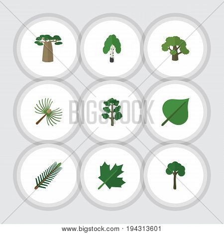 Flat Icon Natural Set Of Rosemary, Tree, Timber And Other Vector Objects. Also Includes Baobab, Birch, Spruce Elements.