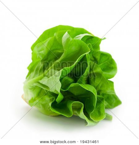 Fresh butterhead salad lettuce (also known as Boston, Bibb, Buttercrunch, and Tom Thumb, Arctic King) isolated on white