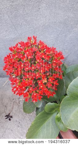 House plant with small red flowers on pot