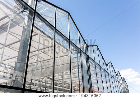 Glass Facade Of Agricultural Glasshouse On Blue Sky Background