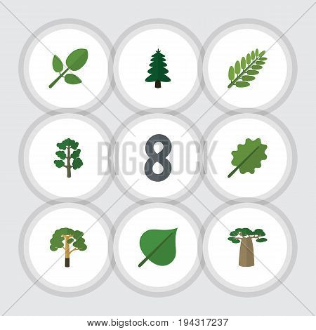 Flat Icon Bio Set Of Wood, Foliage, Forest And Other Vector Objects. Also Includes Park, Wood, Baobab Elements.