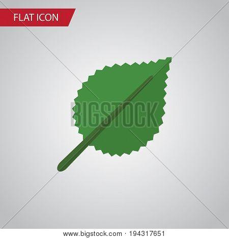 Isolated Alder Flat Icon. Linden Vector Element Can Be Used For Alder, Linden, Leaf Design Concept.