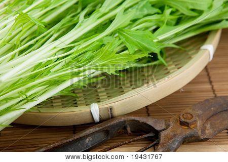 Fresh harvested Mizuna (kyona, Xiu Cai, Kyona, Japanese Mustard) on a bamboo tray.