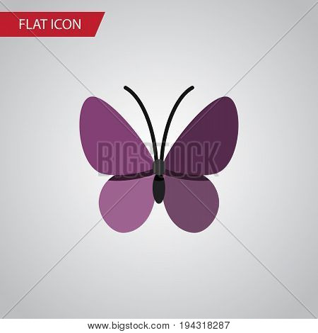 Isolated Summer Insect Flat Icon. Violet Wing Vector Element Can Be Used For Monarch, Summer, Insect Design Concept.