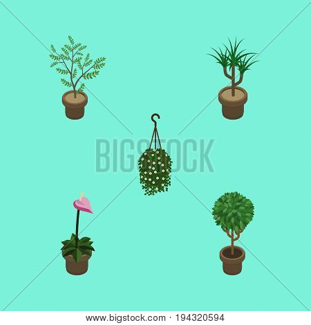 Isometric Houseplant Set Of Houseplant, Blossom, Grower And Other Vector Objects. Also Includes Flower, Hanging, Botany Elements.