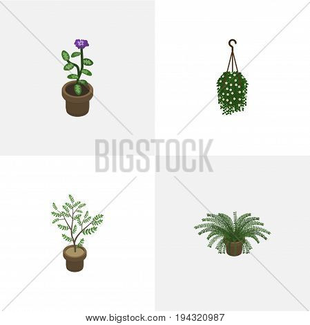 Isometric Houseplant Set Of Blossom, Plant, Flower And Other Vector Objects. Also Includes Hanging, Blossom, Houseplant Elements.