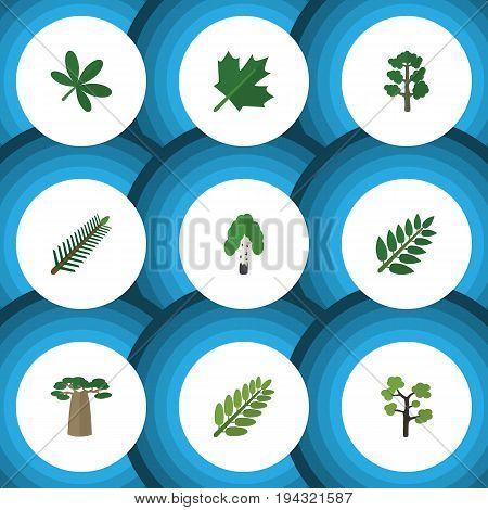 Flat Icon Nature Set Of Leaves, Acacia Leaf, Baobab And Other Vector Objects. Also Includes Birch, Oaken, Tree Elements.