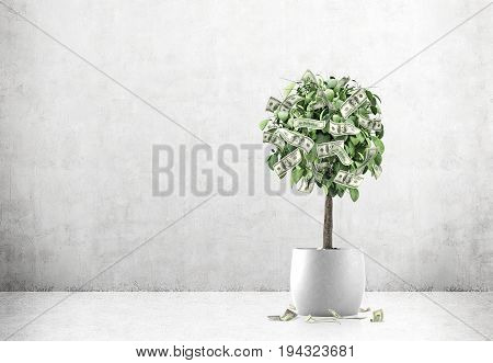 Small tree in a white pot is standing in a room with concrete floor and walls. There are dollar bills growing on it. Mock up